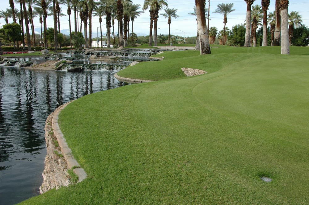 Desert Springs- Palm 3